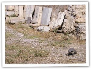 Tortoise in Athens