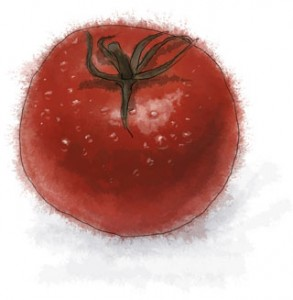 An illustration of a tomato