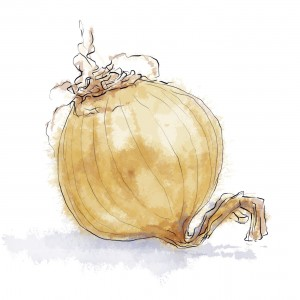 Illustrated Yellow Onion