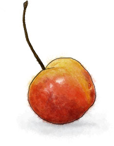 Yellow Cherry Illustration for bourbon cherry recipe