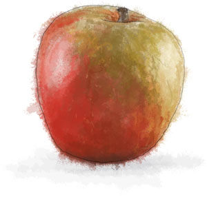 Recipe illustration of an apple for an apple salad with camembert dressing