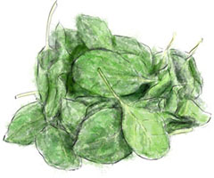 Baby spinach illustration for easy t-bone steak and spinach recipe