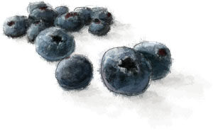 Blueberry illustration for easy flag cake recipe