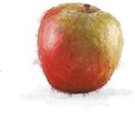 Apple illustration for cinnamon pecan cheesecake recipe