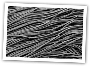 Photo of witches' hair pasta