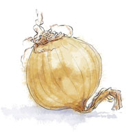 Yellow onion illustration for green pea risotto recipe