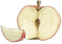 Sliced apple illustration for apple and blackberry crumble recipe