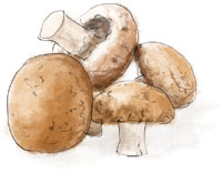 Mushrooms illustration for truffle tagliatelle recipe