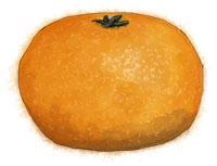 Tangerine illustration for clementine cake recipe for Christmas
