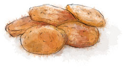 Apricot illustration for goat cheese and apricot flat breads