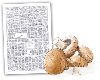 Mushrooms and maps illustration for date night truffled mushroom pasta recipe