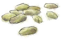 Illustration of pistachios for pistachio cupcake recipe