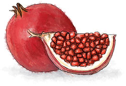Pomegranate illustration for blushing ladies cocktail recipe