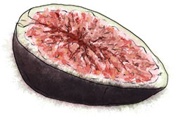 Black fig illustration for aprodisiac pizza recipe