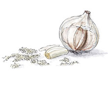 Garlic illustration for chicken cacciatore recipe