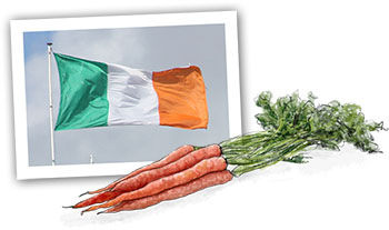 Carrots illustration for an Irish Stew recipe
