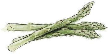 Asparagus illustration for frssh asparagus and butter lettuce salad recipe for spring