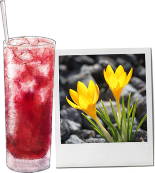 Blushing Lady cocktail illustration and a photo of narcissus for Wendesday cocktail recipe
