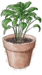 basil illustration for antipasto recipe
