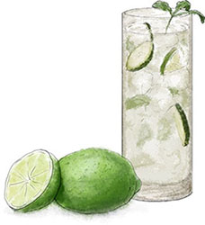 Cucumber Collins illustration for cocktail recipe