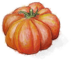 Heirloom tomato illustration for savoury puff pastry pizza recipe
