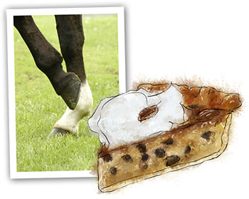 Kentucky Derby illustration of thoroughbred pie for recipe