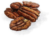 Pecan illustration for Kentucky Derby Thoroughbred pie recipe