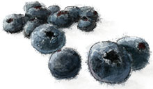 Blueberries illustration for gin collins cocktail recipe
