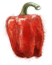 Pepper illustration for salad recipes
