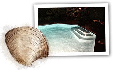 Clam illustration for Hamptons clam bake recipe and night time swimming