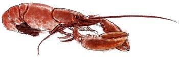 Lobster illustration for Hamptons clambake recipe
