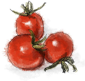 Cherry tomato illustration for summer basil pasta recipe