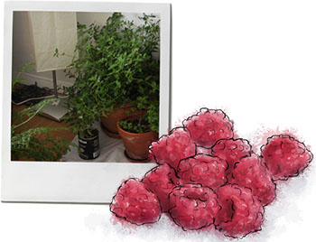 Raspberries and indoor plants for hurricane crumble recipe