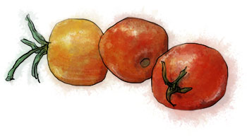cherry tomato illustration for summer mezze salad recipe