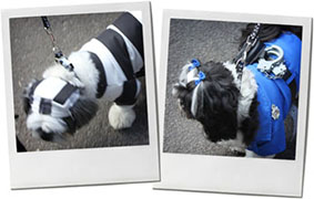 Fancy dress dog from halloween dog parade in Tomkins square park for recipe