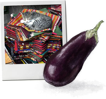 Eggplant illustration And An Istanbul Cat for Imam Bayaldi recipe