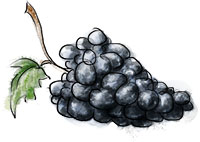 Chianti Grapes illustration for chianti sausage recipe
