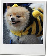 Fancy dress dog from Halloween dog parade in Tomkins square park for recip