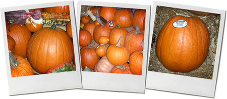 Pumpkin Montage of photos for halloween butternut dip recipe