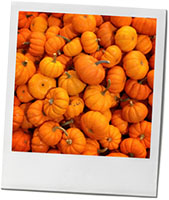 Pumpkins photos for butternut dip halloween recipe