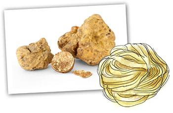 tagliatelle and truffle illustration for home made truffle pasta recipe