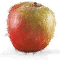 Apple illustration for rosemary apple cake recipe