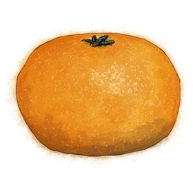 Tangerine illustration for Christmas Clementine cake