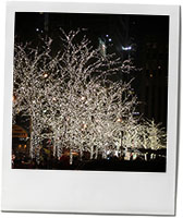 Trees with lights for Christmas