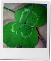 Lucky 4 leaf clover and mint julep recipe