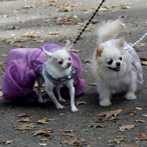 Halloween dogs at tompkins square park