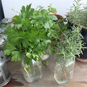 Herbs and moving