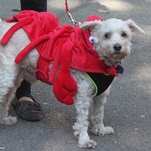 Lobster Dog for Tompkins Square Halloween Parade