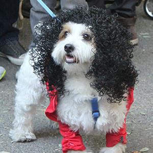 Michael Jackson Dog